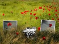 Учимся фотографировать и редактировать фотографии